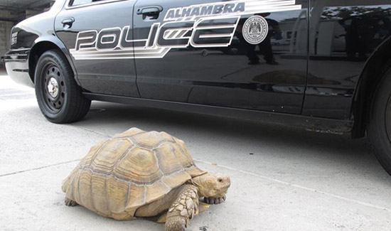 police_save_turtle