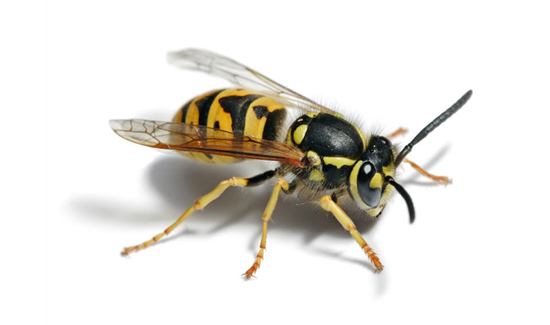 A swarm of angry yellow jackets definitely qualifies as a deadly threat.