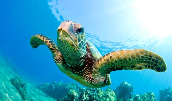 apb_3_2_15_turtle