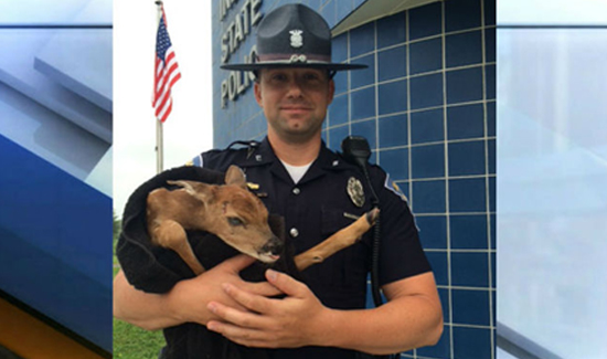 Indiana State Trooper Mike Wood with the baby deer he rescued after it became stranded on Interstate 70.