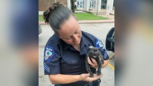 Spring Branch ISD police officers save trapped kitten