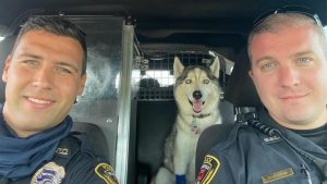 Missouri police rescue dog from hot car after owner is killed in shooting