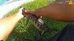 Police remove baby alligator from Texas woman's hot tub