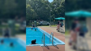 The cops who saved summer: Pawtucket police officers and firefighters volunteer as lifeguards at community pool