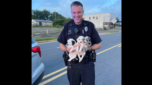 Warner Robins officer picks up three lost puppies on busy road