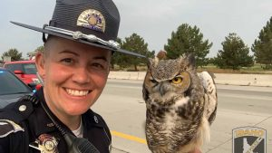 Idaho State Trooper and wildlife expert team up to rescue owl stuck on freeway