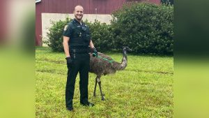 Police return emu to owner after it wanders onto Florida property